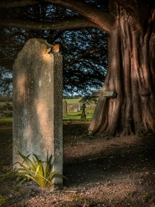 Resting Place by Steve Foreman