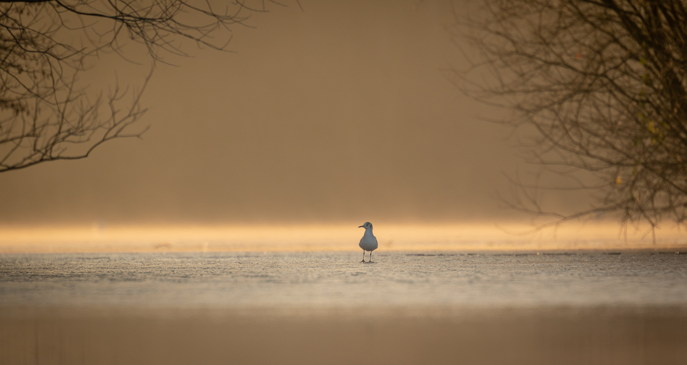 1st Place - Gull on thin ice by Jason Boswell