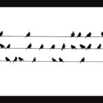 3rd Place - Birdsong by Sue Purver