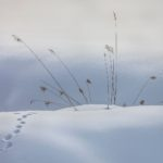 1st Place - Grasses and Fox Tracks by Steve Carroll