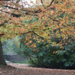Mote Park's Autumn Leaves