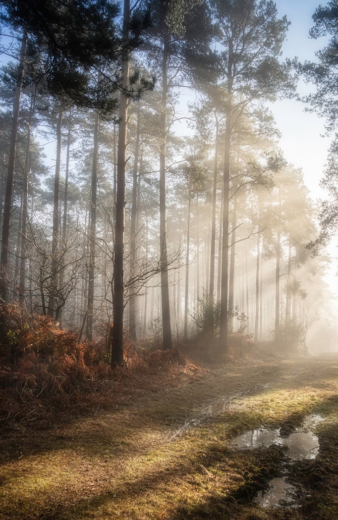 3rd Place - Winter Sunlight, Hemsted Forest by Ray Bridges LRPS, CPAGB, ADPS, BPE3