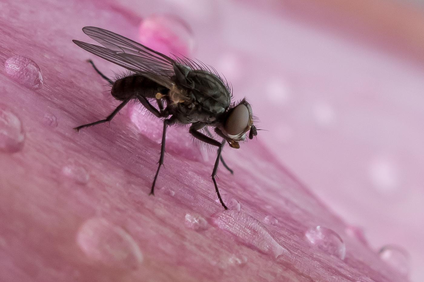 The Fly by Melanie Butcher